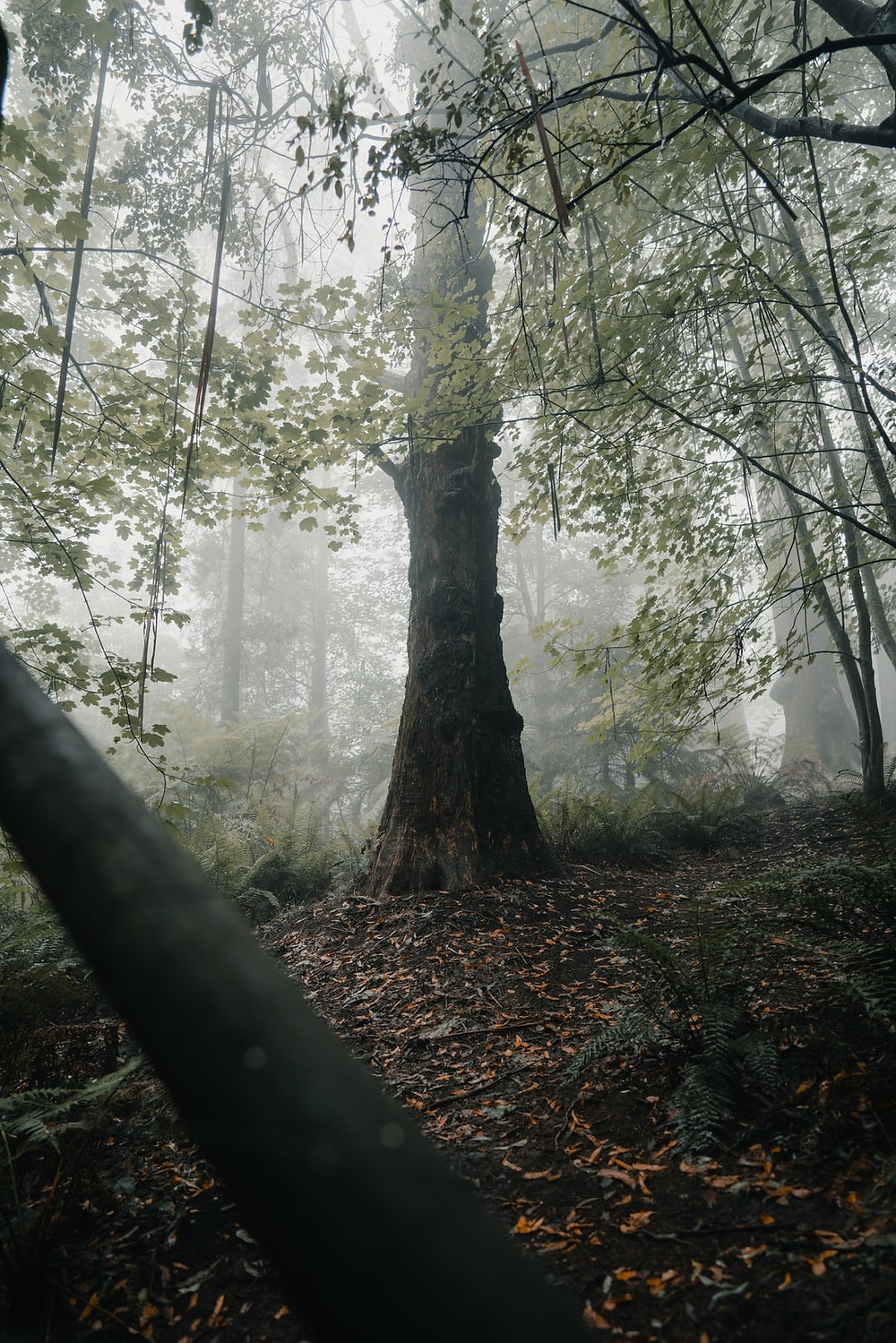 Princess Saydah, mysterious tree with fog and nature forest, So breezy babe, lifestyle blog,