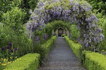 wisteriaAdobeStock_201110476 (2).jpeg