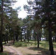 2007_19.JPG