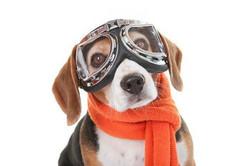 כלב חובב טיסנאות