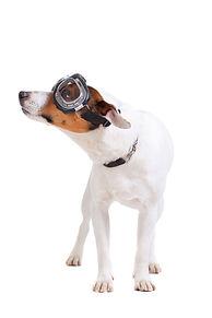 כלב חמוד, עם משקפי טייסים מסתכל לכיוון שק רוח