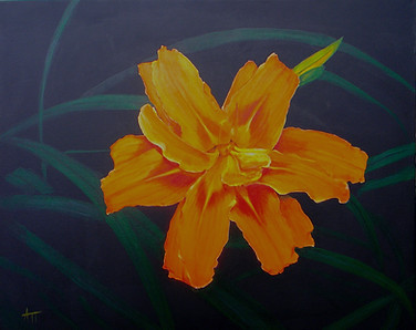"""Tiger Lily"""