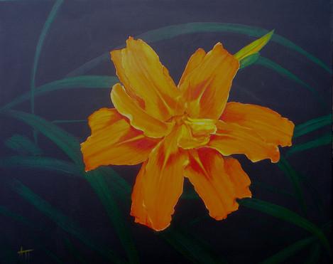 """Tiger Lily"""