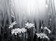 Regrowth flowers.png