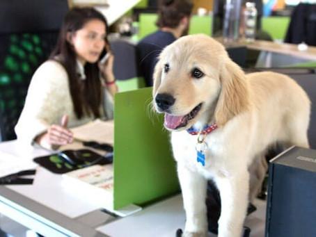 Workplace Pets