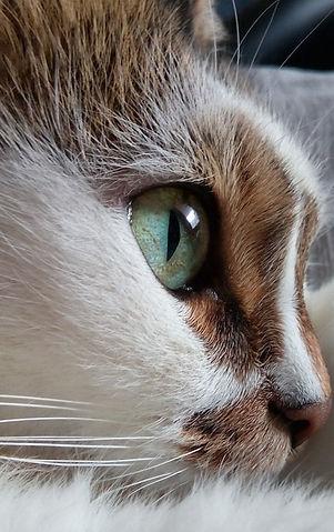 Cat's%20Eye_edited.jpg