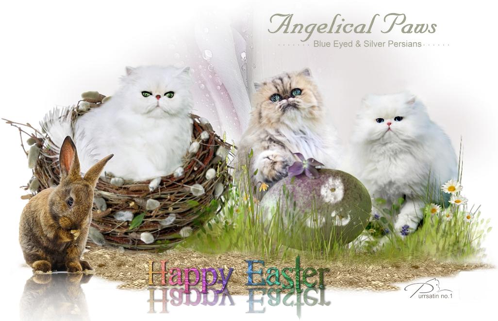 AngelicalPaws