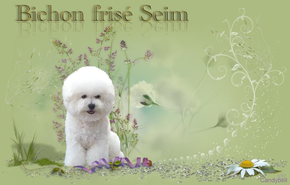 Bichon-Seim