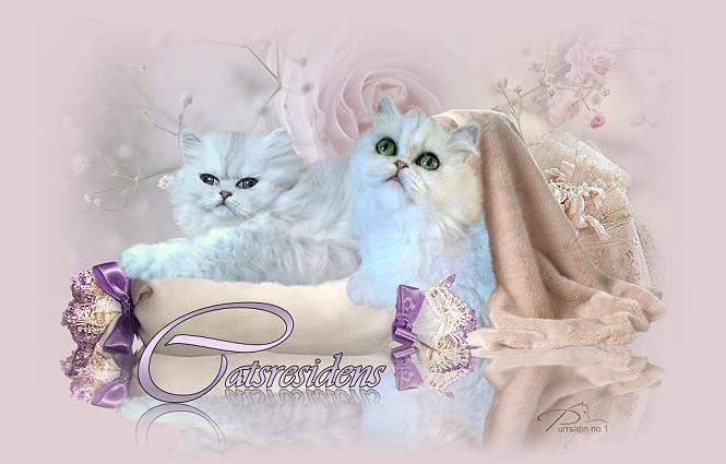 Catsresidens