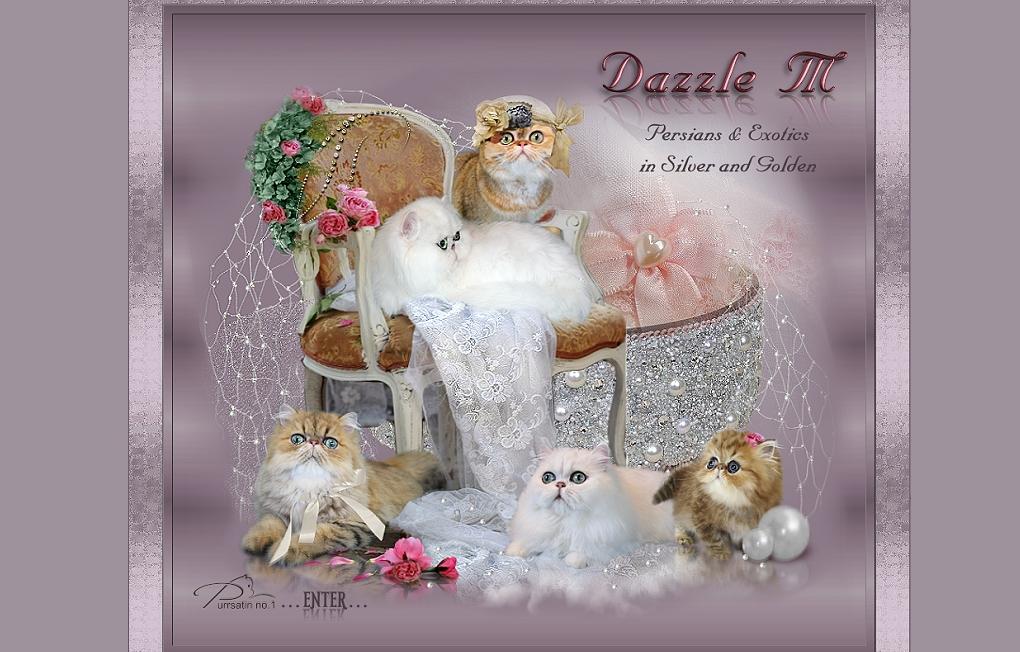 Dazzle M