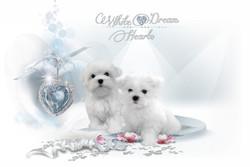 Dream Hearts
