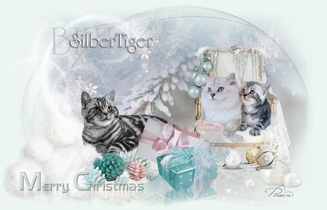 Silbertiger