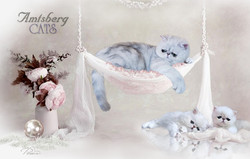 BKH Amtsberg Cats
