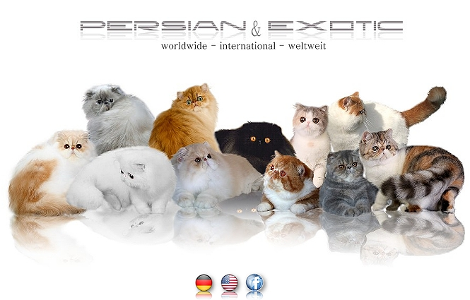 CatClub | Persian & Exotic
