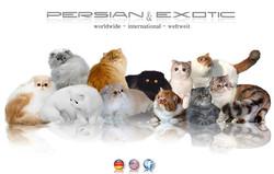 CatClub | Persian & Exotic