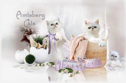 Amtsberg