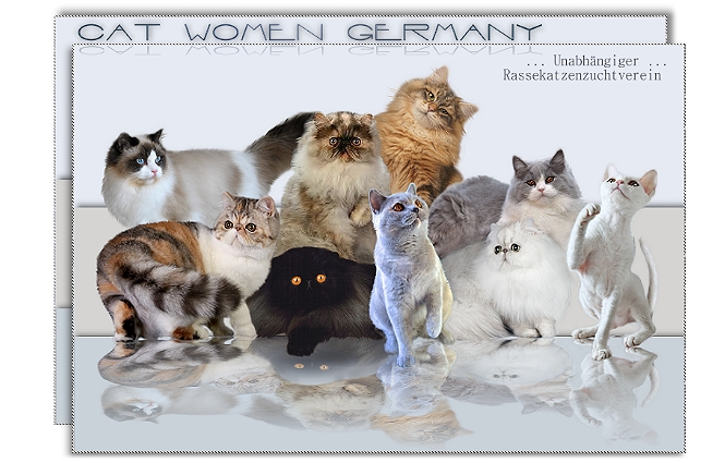 Cat Women Germany