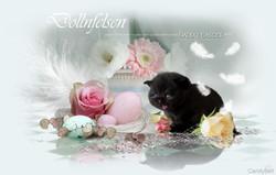 Tierwebdesign Homepage Grafikdesign