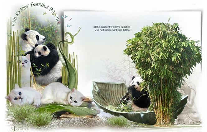 BKH vom Bambus Bärchen