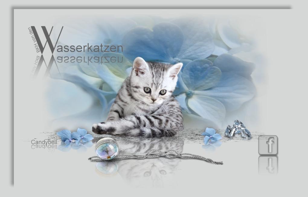 BKH von den Wasserkatzen