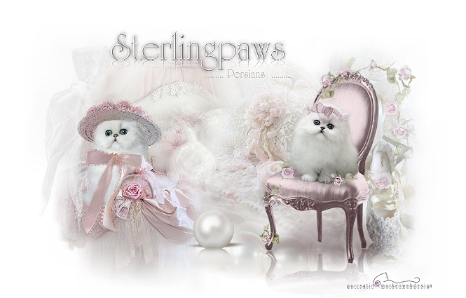 Sterlingpaws