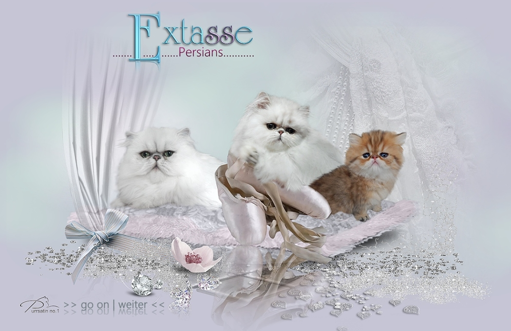 Extasse-Persians