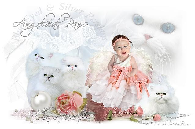 Angelixal Paw Persians