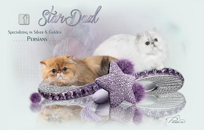 StarDazl Persian Cattery