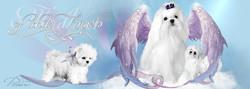 FB-Banner-angels