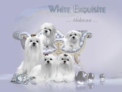 white-brilliance