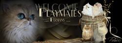 Playmates-FB
