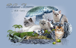 Purrsatin Tierwebdesign