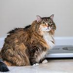 BADIZO  Obesitas bij de hond en kat  FB post (3).jpg
