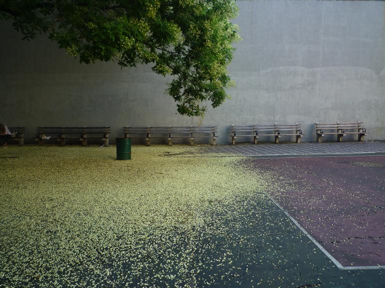 tree seed wave_w.jpg