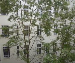 berlin trees.png