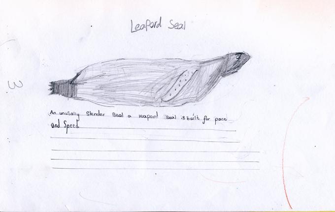 Leopard Seal by Tom Sweet