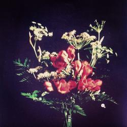 dark flowers.png