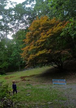 bobby trees w.jpg