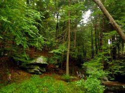 boy forest_w.jpg