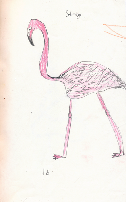flamingo drawing by Tom Sweet