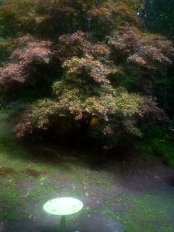 tree table w.jpg