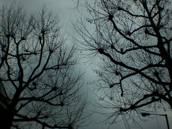 winter trees london.jpg