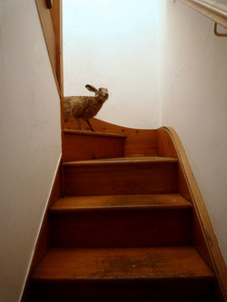 hare stair_w.jpg