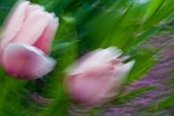 Following Monet variation 6