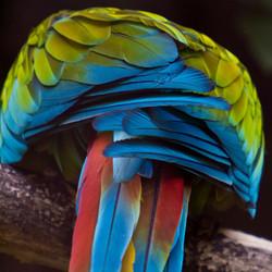 Rainbow feathers variation 1
