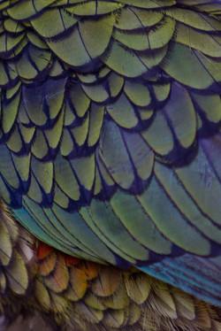 Rainbow feathers variation 4