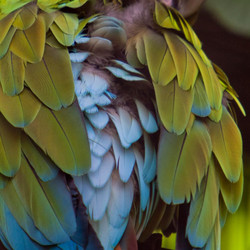 Rainbow feathers variation 5