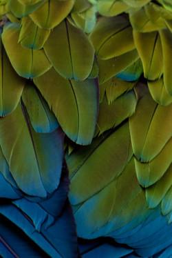 Rainbow feathers variation 2