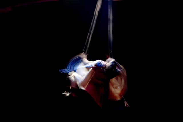 Circus variation 2