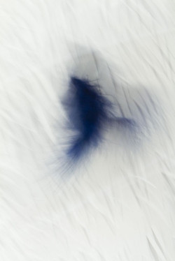 Softness of feather variation 1